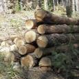 Горски откриха 200 незаконно отсечени дървета