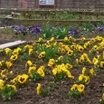 1 милион есенни цветя ще красят Пловдив