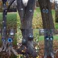 Очи по дървета в Борисовата градина срещу сеч
